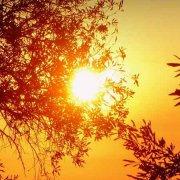 Sonnenseiten des Lebens