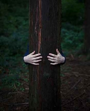 einen Baum umarmen